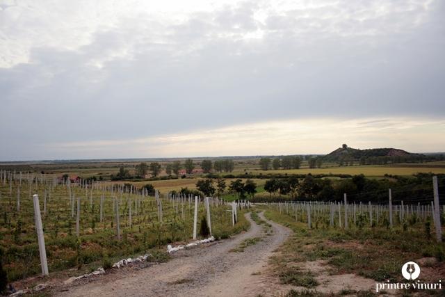 turulung-vii-borsos-sandor-panorama
