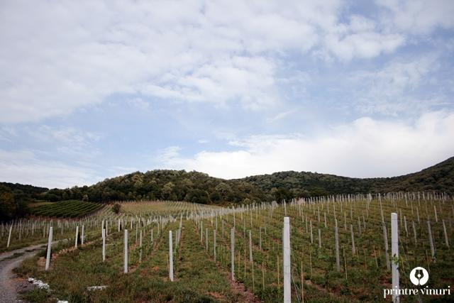 turulung-vii-borsos-sandor-plantatie-tanara-founduri-europene