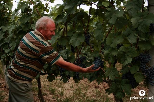 turulung-vii-viticultor-svab