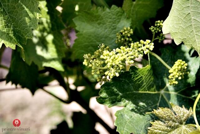 vine-flower