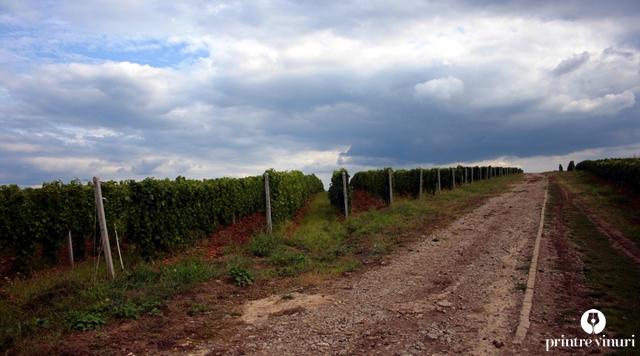 vineyards-jidvei